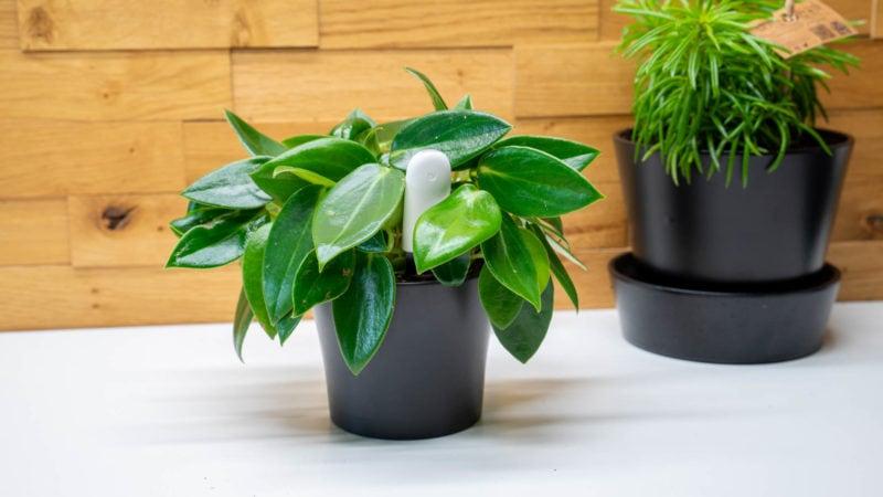 Xiaomi Mi Plant Flower Care Im Test 1