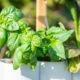 Lilo, Ihr Smarter Indoor Garten Test 20