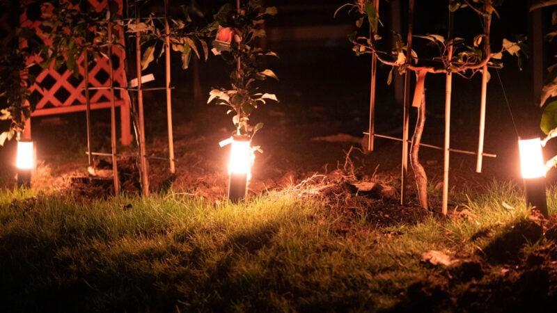 Innr Smart Outdoor Pedestal Light Colour Im Test 9